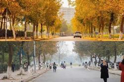 Con đường lá phong đỏ mệnh danh 'Seoul giữa lòng Hà Nội': Ảnh thực tế khác xa!