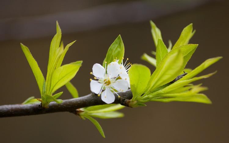 Mùa xuân sang, 4 điềm dự báo tin vui gõ cửa, phú quý đến nhà-1