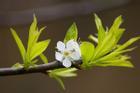 Mùa xuân sang, 4 điềm dự báo tin vui gõ cửa, phú quý đến nhà