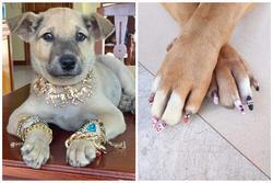 Chú chó được 'con sen' trang bị đồ để đón Tết sang chảnh khiến dân mạng bật cười