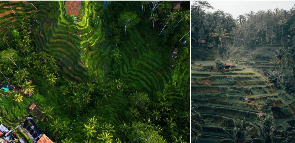 Sa Pa và những nơi có ruộng bậc thang đẹp nổi tiếng-3