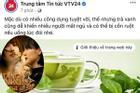 VTV 'cà khịa' gắt sự xuất hiện của 'trà xanh' khi Sơn Tùng - Thiều Trâm tan vỡ