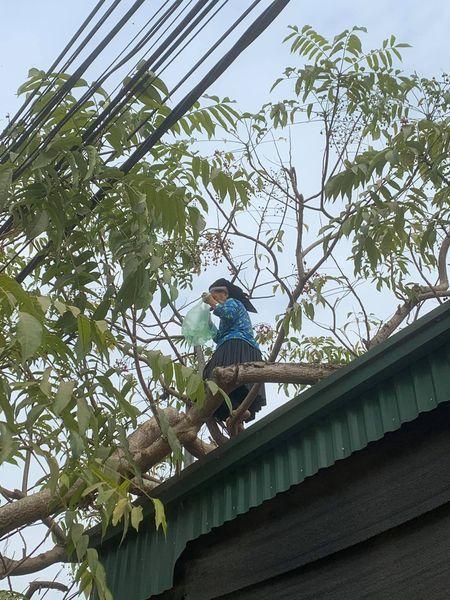 Cụ bà U70 leo cây thoăn thoắt hái quả, cô gái trẻ nhìn qua phải ngả mũ thán phục-2