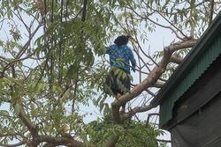 Cụ bà U70 leo cây thoăn thoắt hái quả, cô gái trẻ nhìn qua phải ngả mũ thán phục