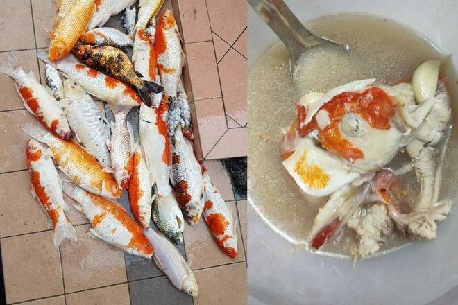 Phẫn nộ cô gái chế biến 20 con cá Koi thành súp rồi đăng lên mạng-3