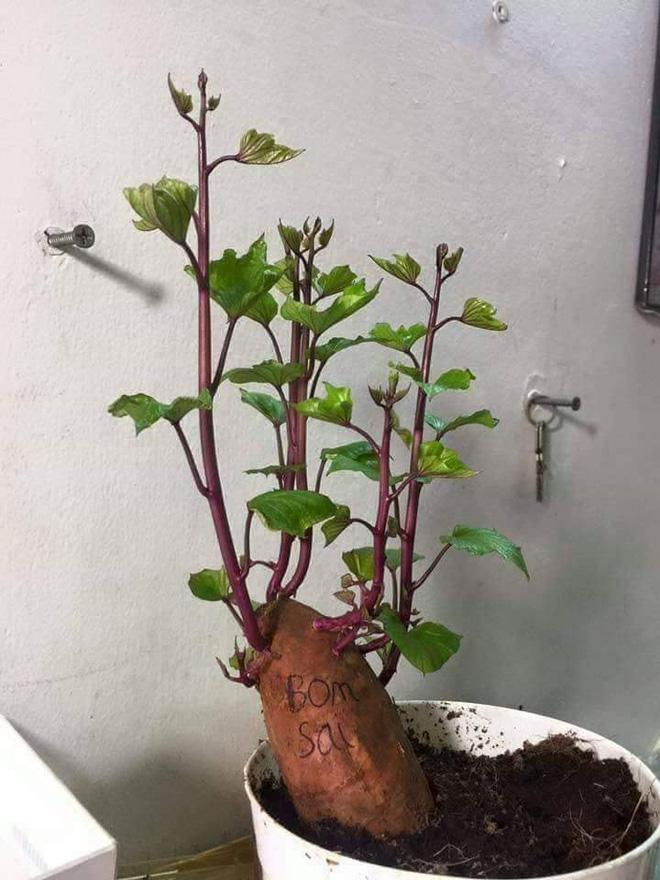 Cười ngất với loạt cây bonsai trưng Tết bá đạo, đào quất còn thua xa-7