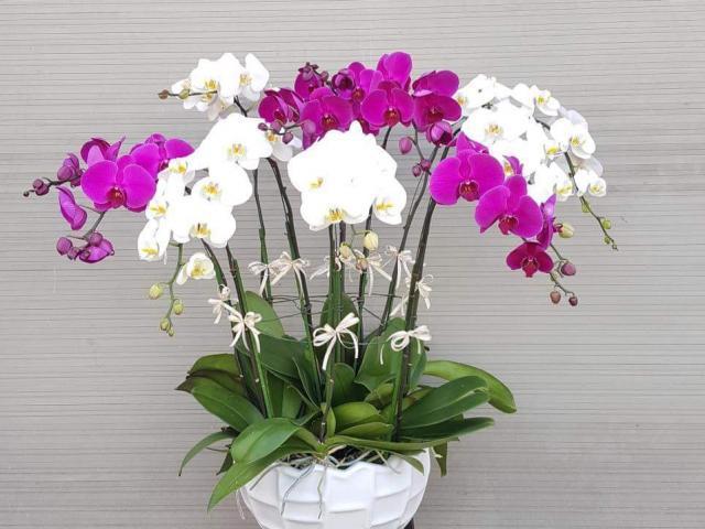 Cuối năm đặt ngay loại hoa này trong nhà để mời gọi thần tài, tiền đổ vào như thác-1