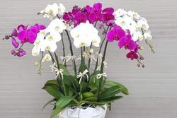 Cuối năm đặt ngay loại hoa này trong nhà để mời gọi thần tài, tiền đổ vào như thác