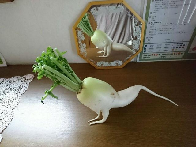 Củ cải trắng tập thể dục đắt hàng tại Nhật Bản-1