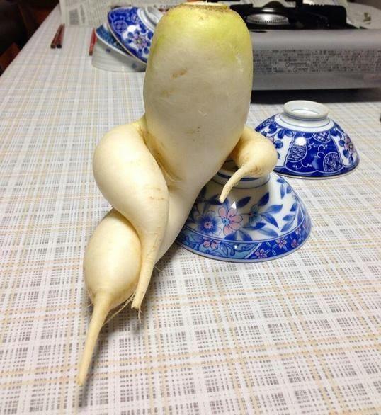 Củ cải trắng tập thể dục đắt hàng tại Nhật Bản-4