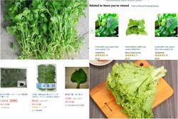 4 loại rau gia vị 'quê nhà' rẻ bèo, cho không được nhưng sang 'bển' lại 'đắt như vàng'