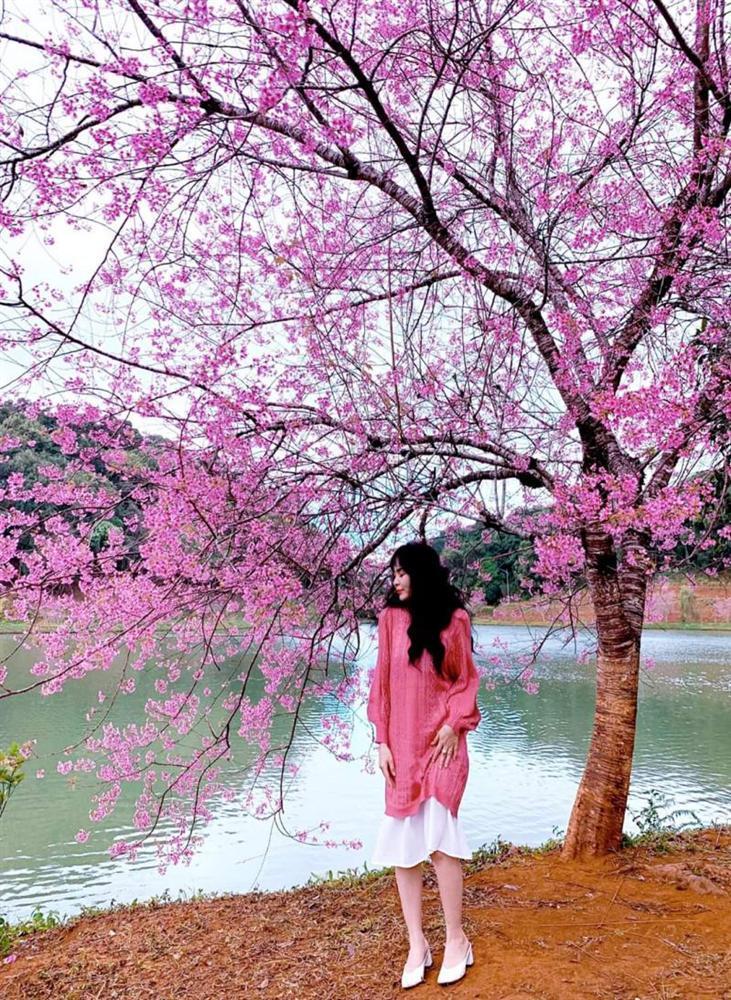 Chẳng cần lên Đà Lạt, Kon Tum cũng có hoa mai anh đào phủ hồng cả bầu trời đây này-6