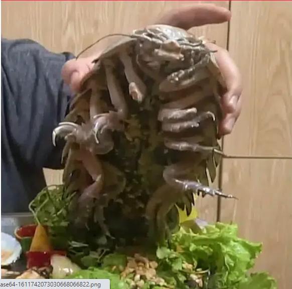 Dân mạng sởn gai ốc với màn review ăn thử món bọ biển khổng lồ giá 4 triệu/con-1