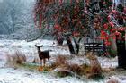 Mùa đông tuyệt đẹp trên khắp thế giới