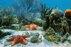 Những sinh vật kỳ bí dưới đáy biển ở đảo Tonga