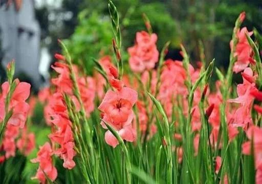 Loài hoa nào đang tượng trưng cho vận mệnh của bạn?-2