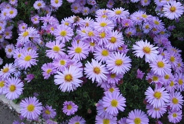 Loài hoa nào đang tượng trưng cho vận mệnh của bạn?-3