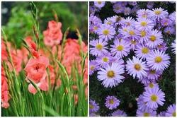 Loài hoa nào đang tượng trưng cho vận mệnh của bạn?