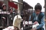 Tiêu Chiến vuốt ve những vị khách đáng yêu trên phim trường 'Đấu La Đại Lục'