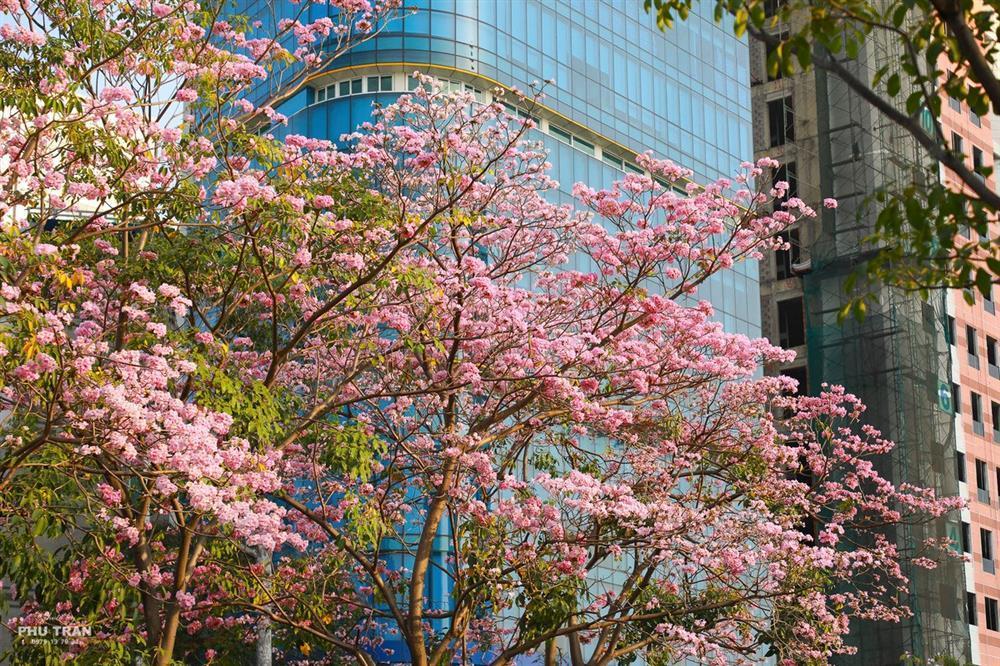 Mê mẩn sắc hoa đẹp đang nở rộ, dân tình chỉ muốn check-in sống ảo-6