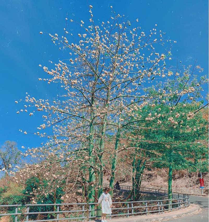Mê mẩn sắc hoa đẹp đang nở rộ, dân tình chỉ muốn check-in sống ảo-12