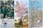 Mê mẩn sắc hoa đẹp đang nở rộ, dân tình chỉ muốn check-in 'sống ảo'