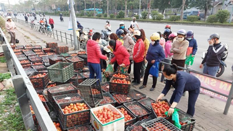 Mẹ Hà Nội mách cách làm tương cà siêu sạch từ cà chua giải cứu nông sản-1