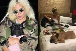 2 chú chó của Lady Gaga được tặng đồ hiệu, đi máy bay riêng