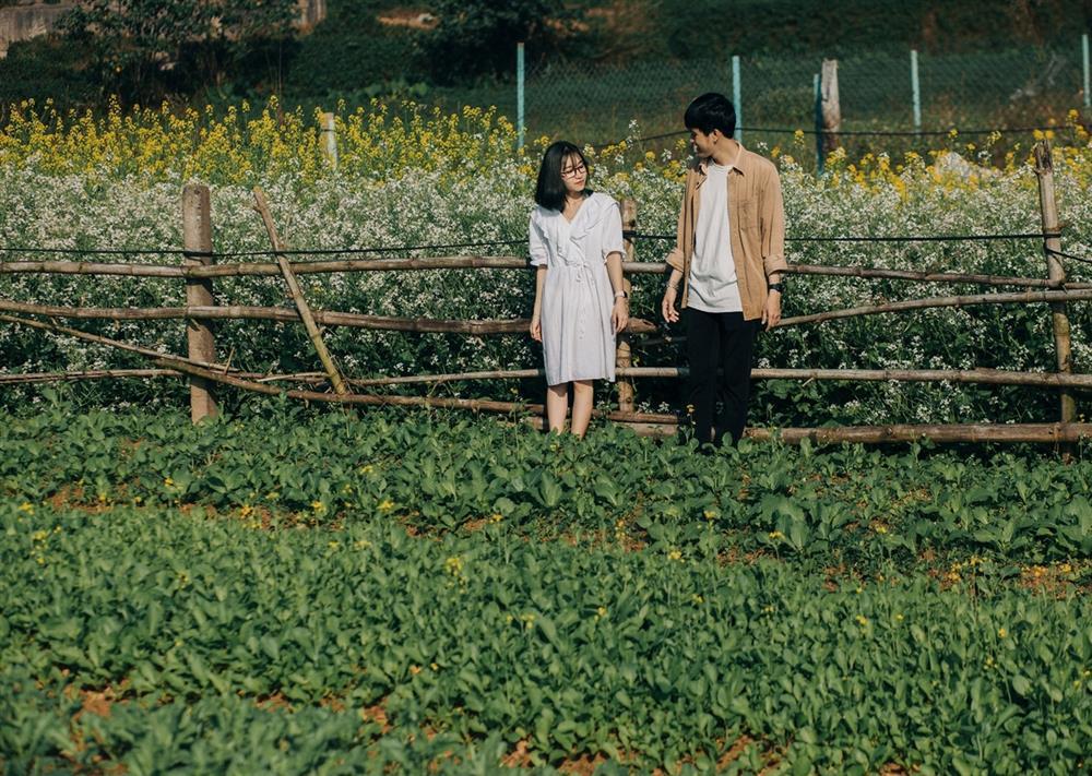 Vườn hoa cải thơ mộng ở Huế-4