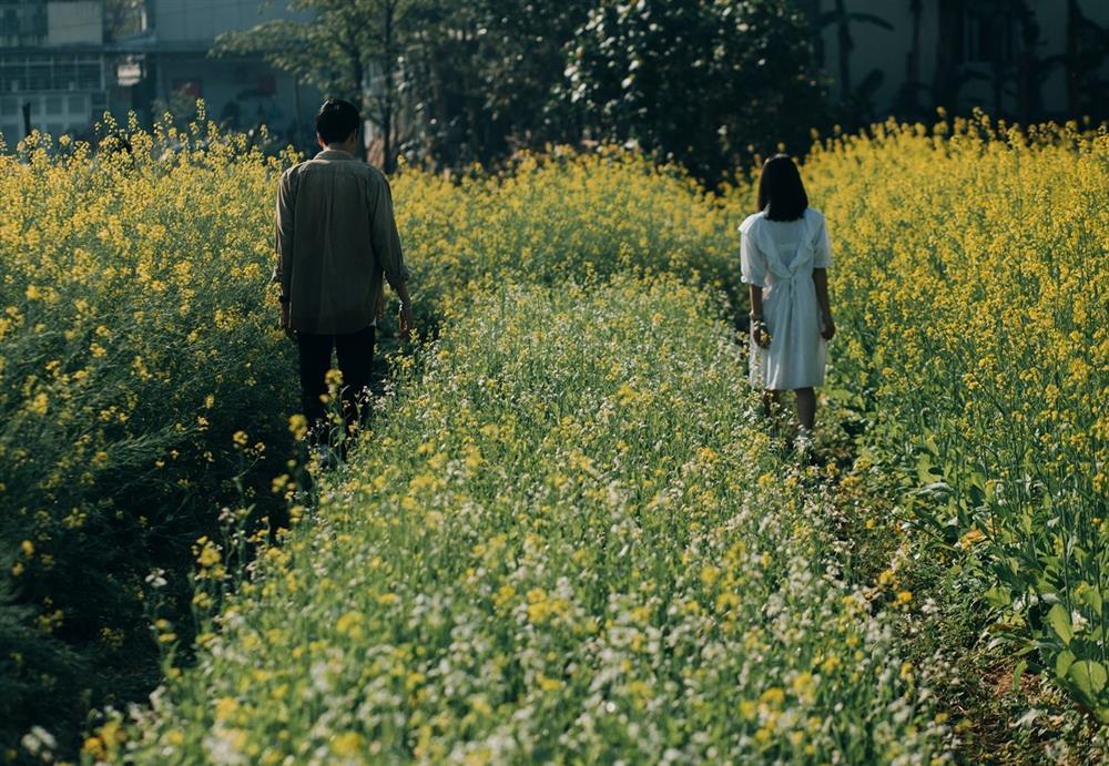 Vườn hoa cải thơ mộng ở Huế-6