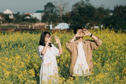 Vườn hoa cải thơ mộng ở Huế