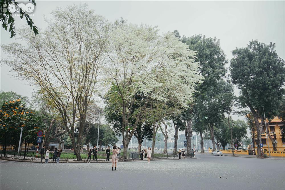 Hoa sưa nở trắng trời tạo nên khung cảnh Hà Nội đẹp như thơ, đầy xao xuyến-10
