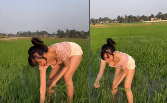 Đi dặm lúa để vòng 1 như rơi ra ngoài, bà Tưng ăn đá tảng-3