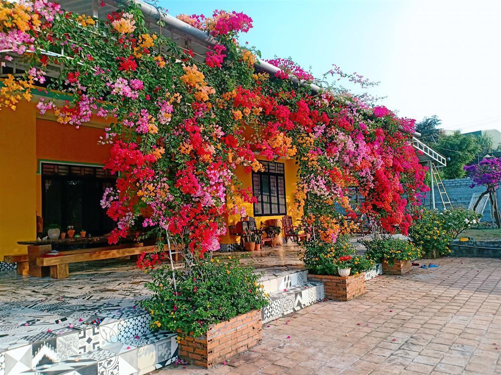 Vườn hoa giấy đẹp như cổ tích của chàng trai trẻ dành cả thanh xuân chăm sóc-4