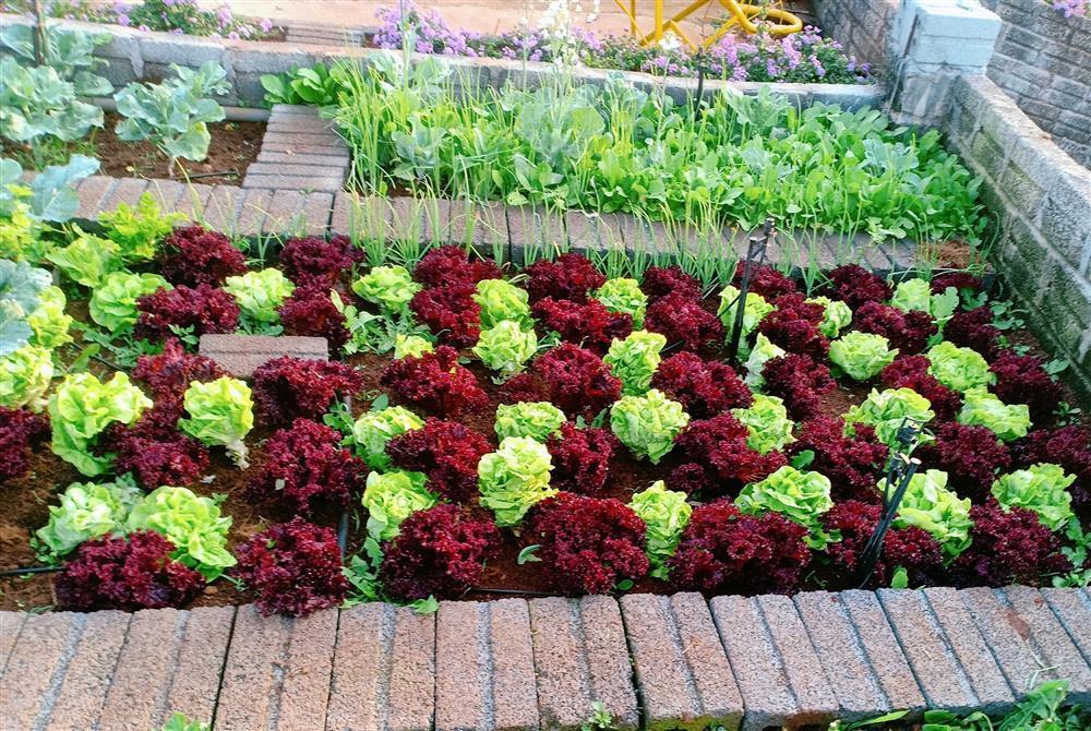 Vườn hoa giấy đẹp như cổ tích của chàng trai trẻ dành cả thanh xuân chăm sóc-11