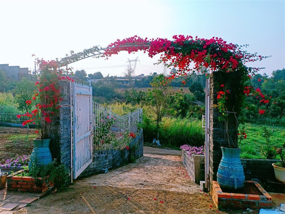 Vườn hoa giấy đẹp như cổ tích của chàng trai trẻ dành cả thanh xuân chăm sóc-5