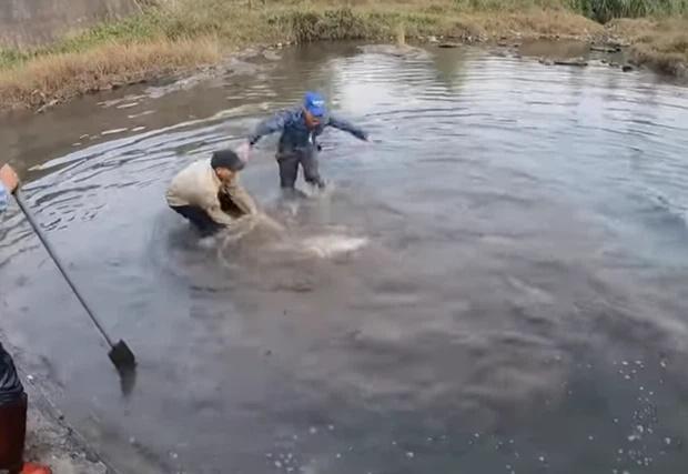 Nhóm thanh niên Hải Phòng ăn đá tảng vì đăng clip ngược đãi cá sấu-1