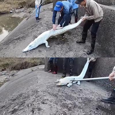 Nhóm thanh niên Hải Phòng ăn đá tảng vì đăng clip ngược đãi cá sấu-2