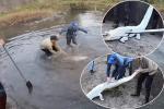 Nhóm thanh niên Hải Phòng ăn đá tảng vì đăng clip ngược đãi cá sấu