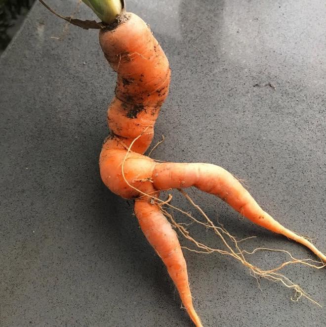 Bộ sưu tập những củ cà rốt có đôi chân dài miên man khiến hội chị em ao ước-4