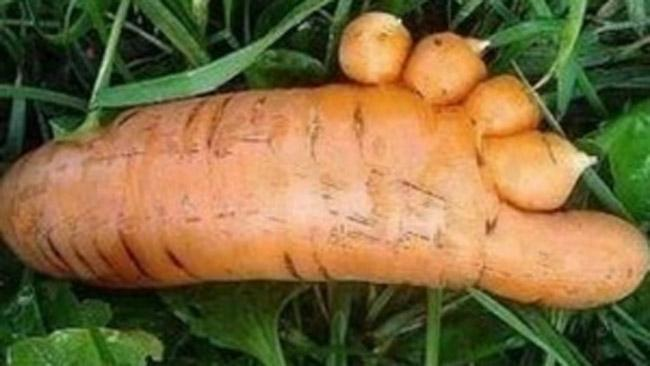 Bộ sưu tập những củ cà rốt có đôi chân dài miên man khiến hội chị em ao ước-10