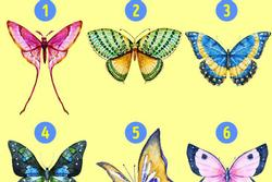 Con bướm bạn chọn sẽ tiết lộ những tính cách ẩn giấu bên trong con người bạn