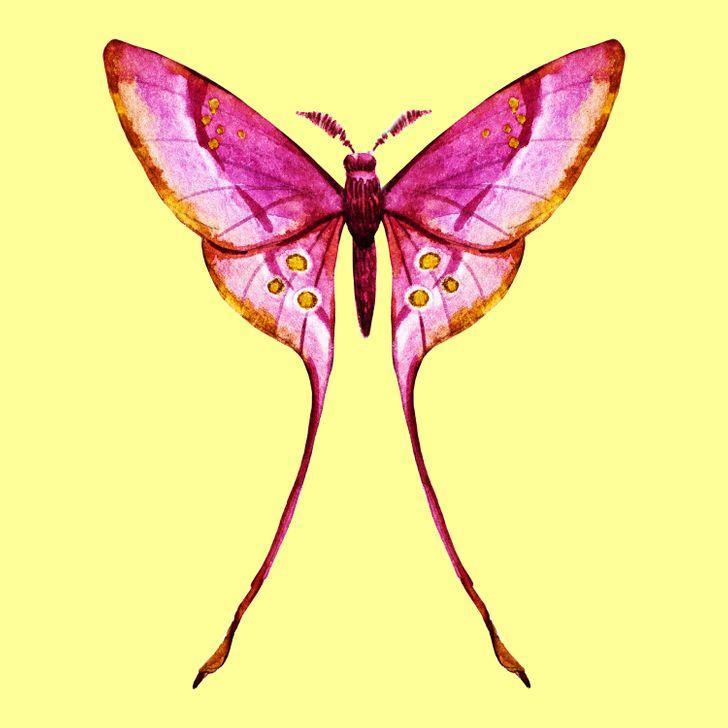 Con bướm bạn chọn sẽ tiết lộ những tính cách ẩn giấu bên trong con người bạn-2