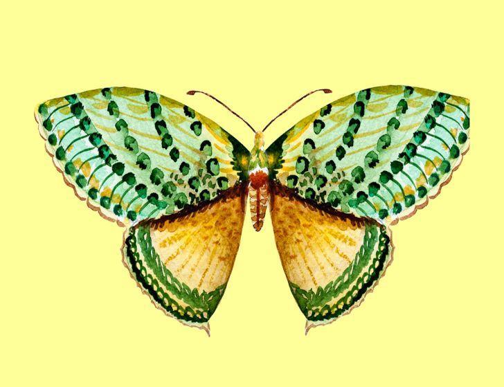 Con bướm bạn chọn sẽ tiết lộ những tính cách ẩn giấu bên trong con người bạn-3