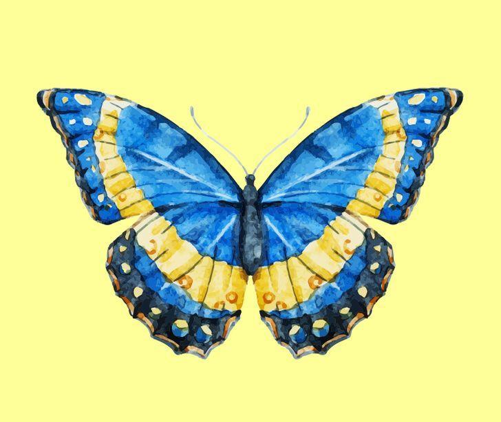 Con bướm bạn chọn sẽ tiết lộ những tính cách ẩn giấu bên trong con người bạn-4