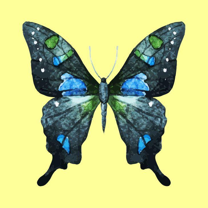 Con bướm bạn chọn sẽ tiết lộ những tính cách ẩn giấu bên trong con người bạn-5
