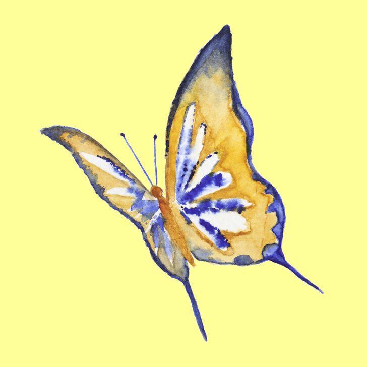 Con bướm bạn chọn sẽ tiết lộ những tính cách ẩn giấu bên trong con người bạn-6