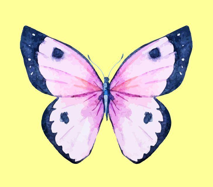Con bướm bạn chọn sẽ tiết lộ những tính cách ẩn giấu bên trong con người bạn-7