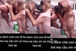 Clip: Chó con bị chủ bắt đi, chó mẹ có hành động khiến triệu người xúc động
