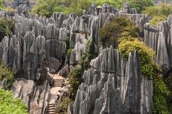 Khu rừng đá vôi 270 triệu năm tuổi